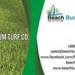 Beach Bum Turf